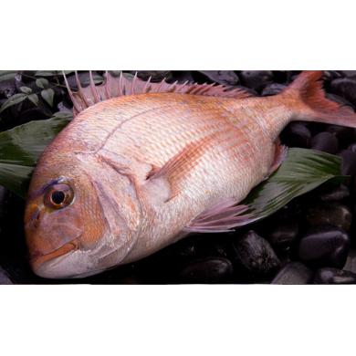 真鯛(養殖)1匹丸ごと食べちゃえセット